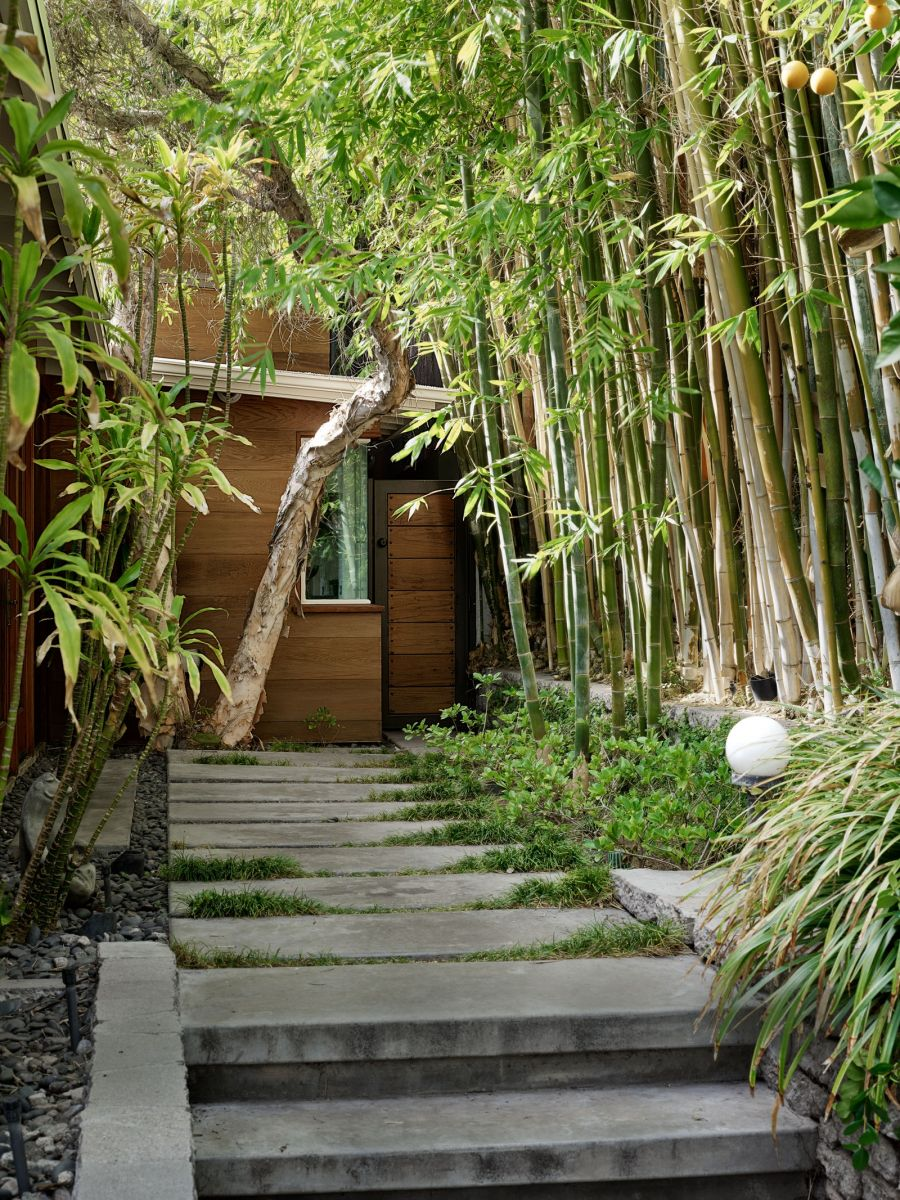 Không gian ngôi nhà bao phủ bởi các tầng cây